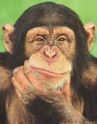 CHIMPTHINKING