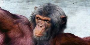 chimpgod