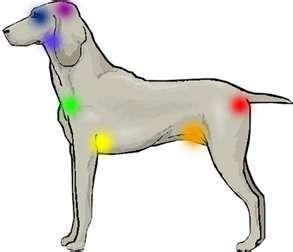 reikidog2